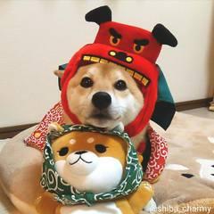 チャーミー 柴犬